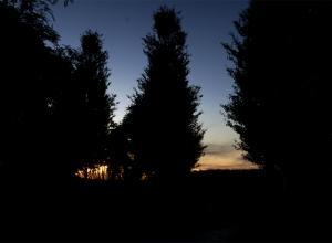 Nature_octane_night.jpg