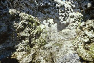 Rock-scan-Canyon-post-small.jpg