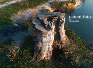 tree_stump-2.jpg